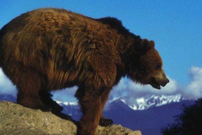 bear new hampshire smoking