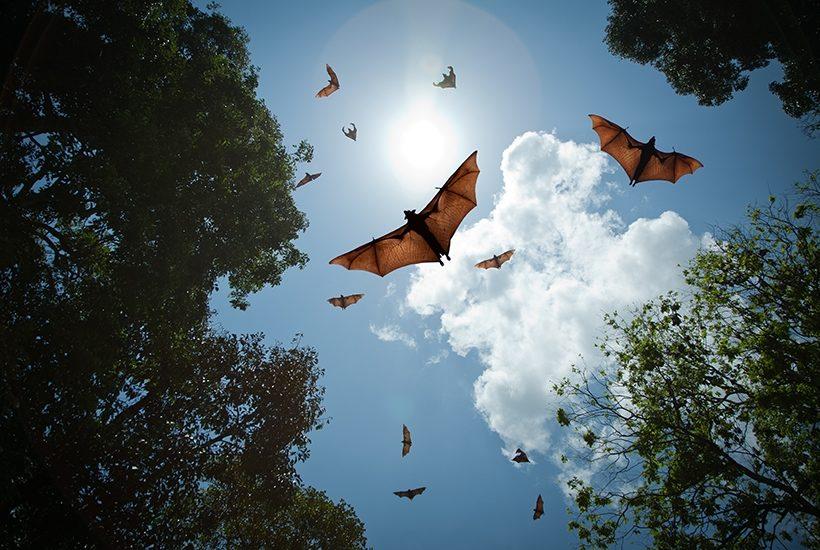 bats trust