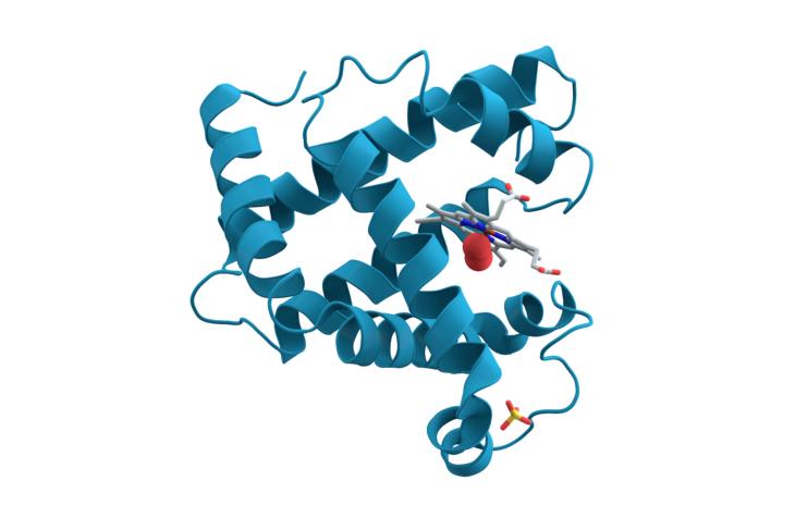 dna myoglobin proteins
